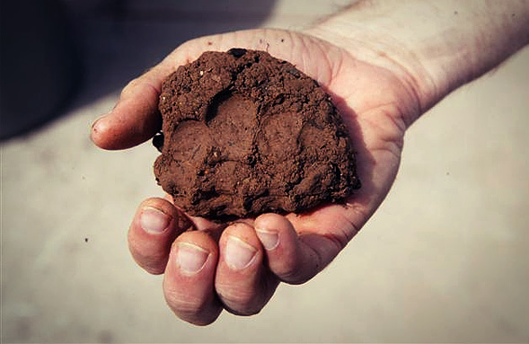 Best soil amendment for clay soil humicgreen for Best top soil