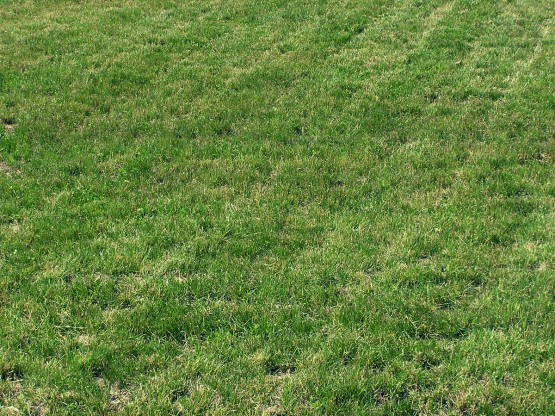 Dead Grass Dog Urine
