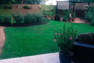 Zoysia Lawn Care with Dogs Austin TX