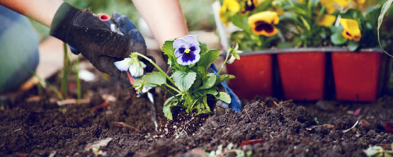 Improving Clay Soil Around Flowers