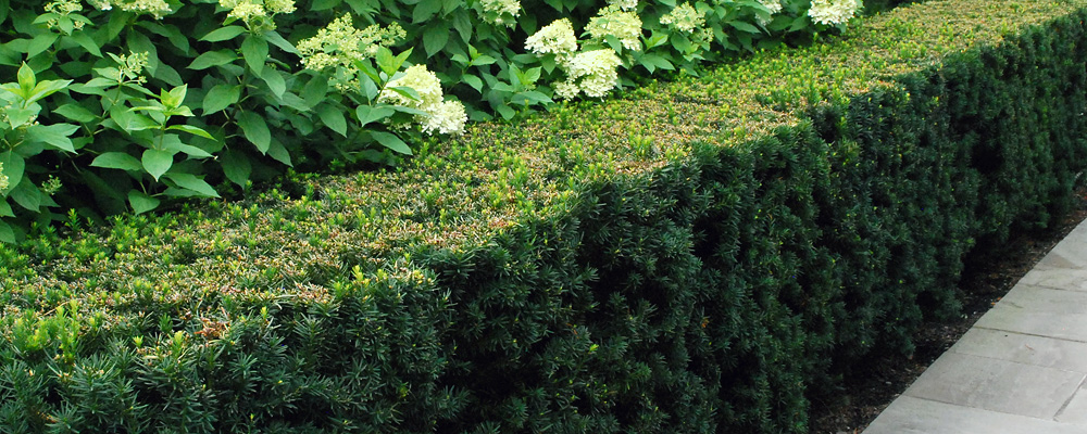 Improving Clay Soil Around Trees And Shrubs Humicgreen Llc
