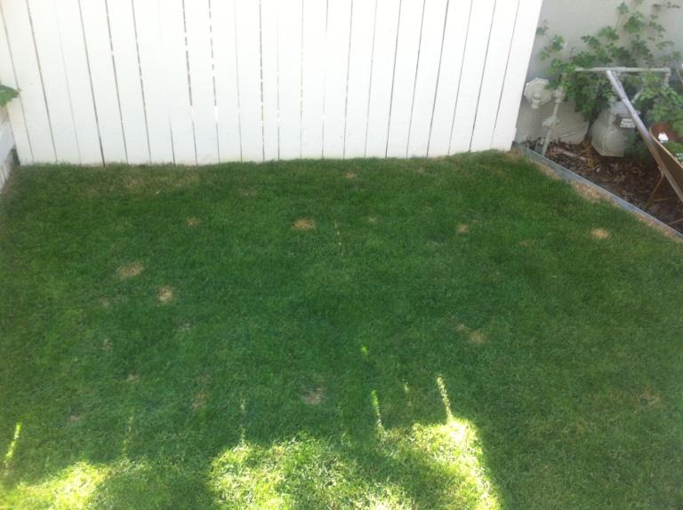Lawn Before Application